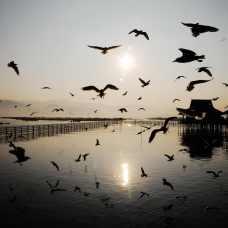 2014-01緬甸6茵萊湖23