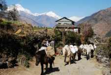 2011-01尼泊爾精華132